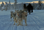 2011 Autofans Saab Arctic Adventure 14