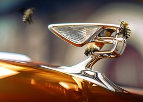 Bentley Brussels abeilles