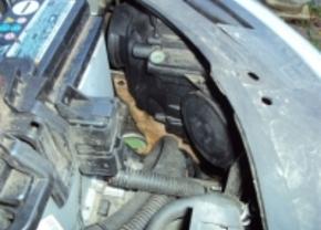Man vindt prairiehond onder motorkap in Brasschaat
