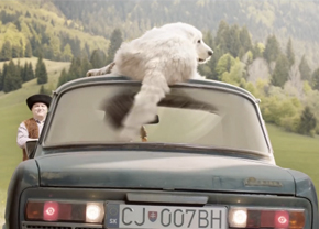video-sk-reclame-dieren_intr