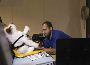 Hond kan veilig meereizen dankzij Subaru