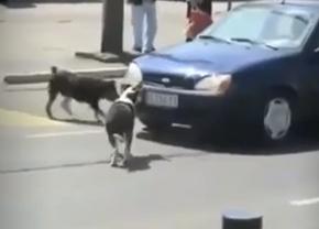 dogvscar